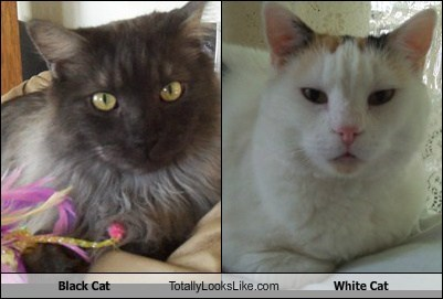 Black Cat Totally Looks Like White Cat