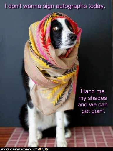 dogs,what breed,head scarf,no autographs,celeb