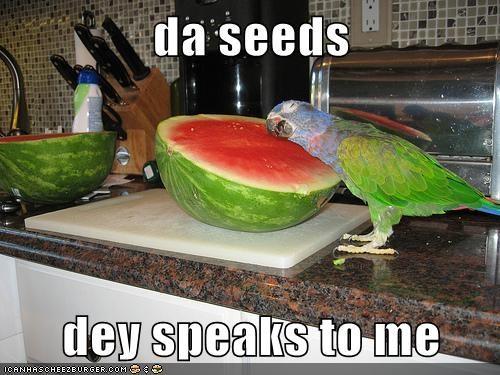 parrot,seeds,watermelon,listening,speaking