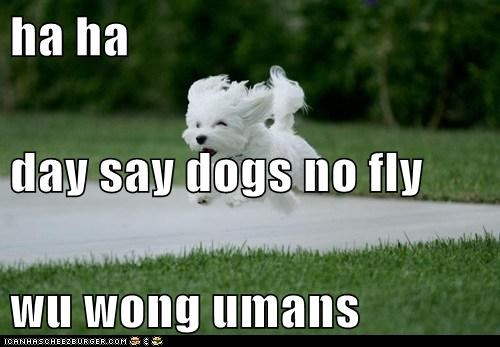 ha ha day say dogs no fly  wu wong umans