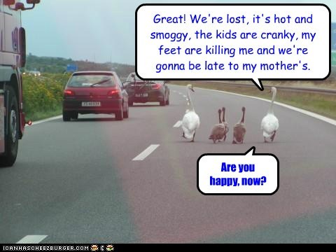 geese,lost,traveling,cranky,walking,mother,late,arguing,happy
