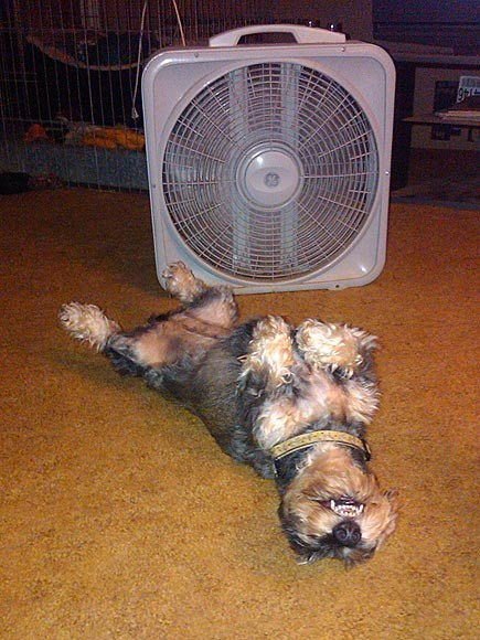 Around the Interwebs: 13 Pets Beat the Summer Heat