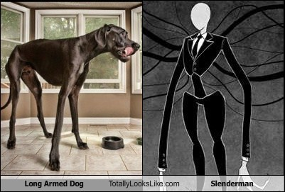 Long Armed Dog Totally Looks Like Slenderman