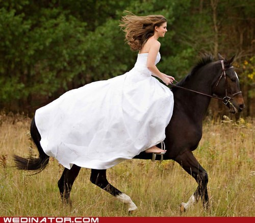 Horse Wedding Miracles