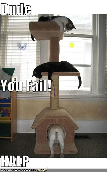 Dude You Fail! HALP