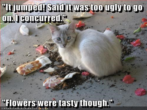 """""""It jumped! Said it was too ugly to go on. I concurred.""""  """"Flowers were tasty though."""""""