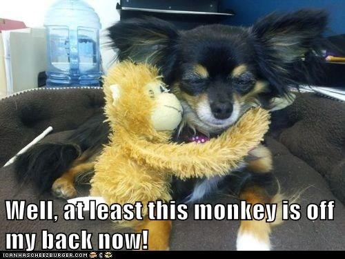 Well, at least this monkey is off my back now!