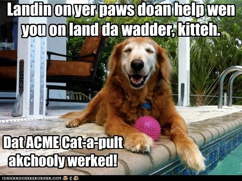 dogs,what breed,catapult,swimming pool,cat,laughing