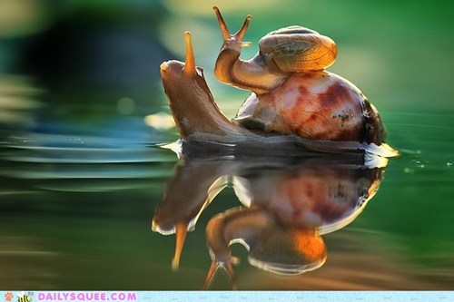 piggy back,shells,snail,squee,puddles