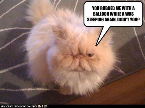 balloon,captions,Cats,fuzzy,sleep,static,categoryimage