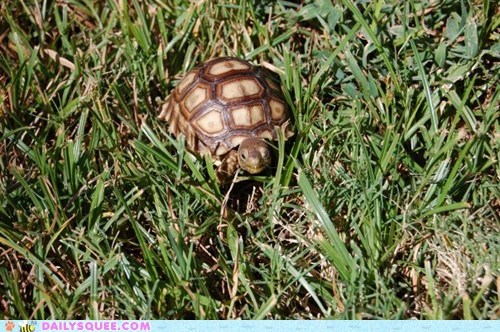 Reader Squee: Little Turtle, Big World