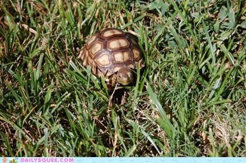 Reader Squee: Little Turtle, Big World