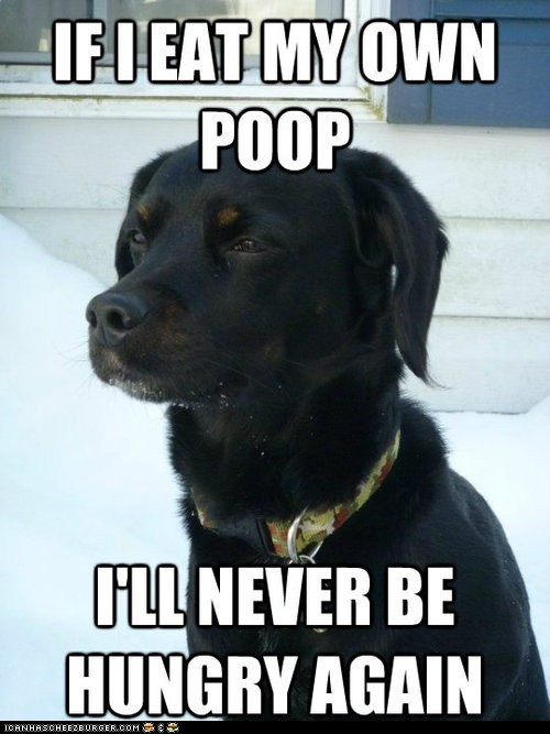 A Dog's Logic is... Unique...