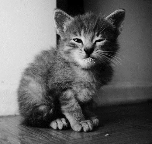 Cats,cyoot kitteh of teh day,kitten,milk,milk mustache,skeptical,stink eye
