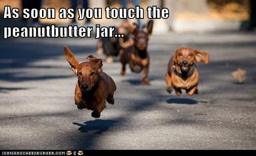 As soon as you touch the peanutbutter jar...