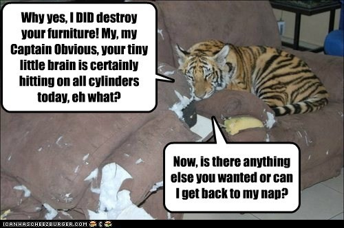 cat,furniture,tiger,captain obvious,nap,defiant,brain,insult,destroyed,clawing
