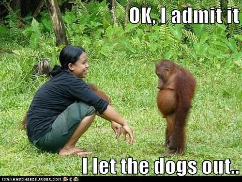 song,orangutan,who let the dogs out,baha men,admit it,Sad,confess