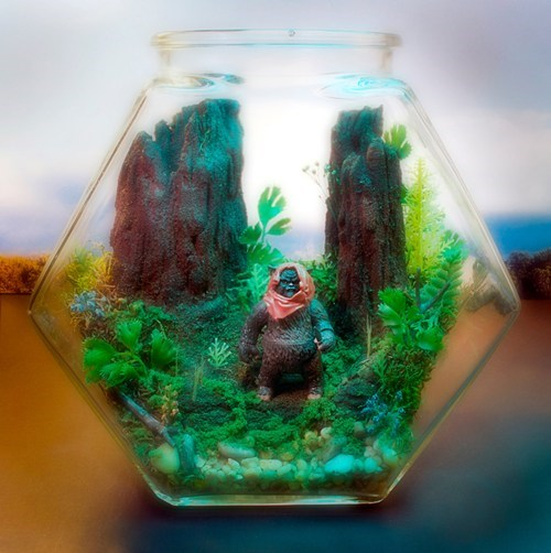 design,nerdgasm,star wars,terrarium