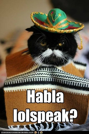 spanish,espanol,mexico,captions,poncho,Cats