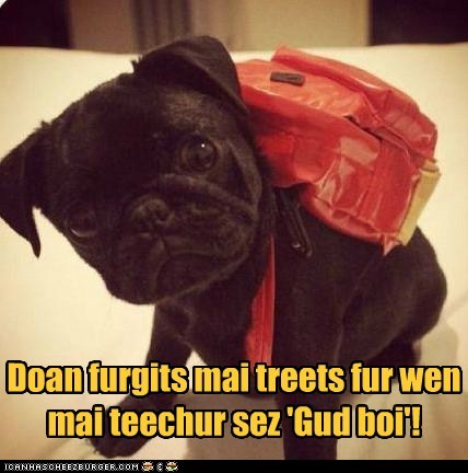 dogs,puppy,pug,backpack,treats,school,good boy