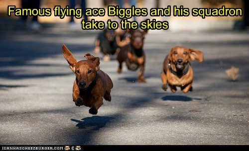 Famous flying ace Biggles and his squadron take to the skies