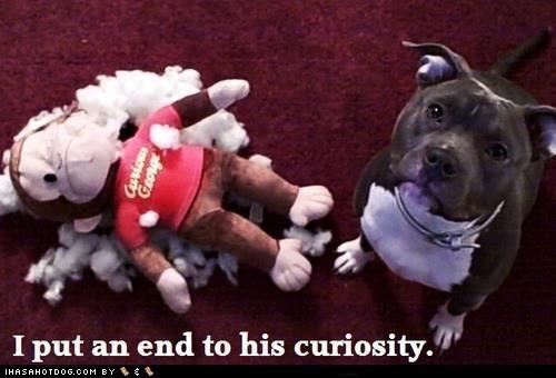 Curious George,dogs,stuffed animal,pitbull,monkey,stuffing