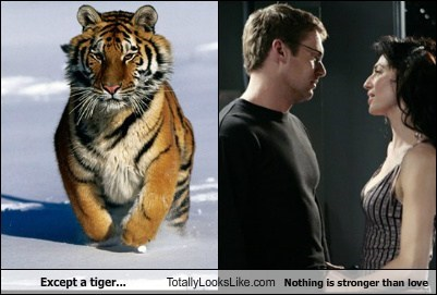 Except a tiger... Totally Looks Like Nothing is stronger than love