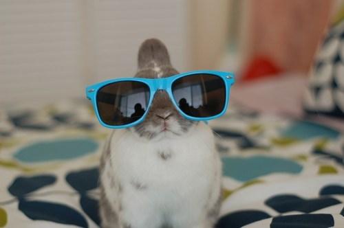 bunny,cool,happy bunday,hipster,rabbit,sunglasses