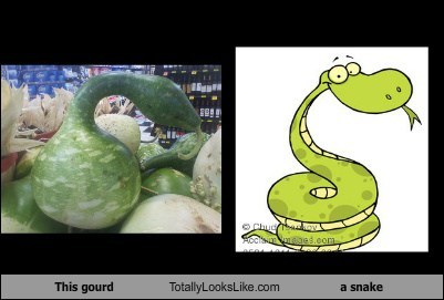 This Gourd Totally Looks Like a Snake