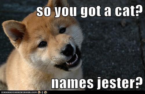 so you got a cat?  names jester?