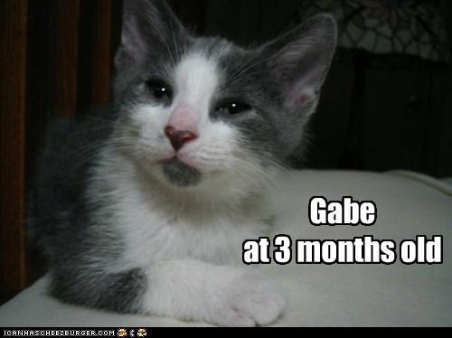 allcats' kittehs