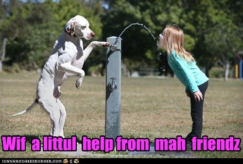 dogs,friends,with a little help,help,drinking fountain,what breed,little girl