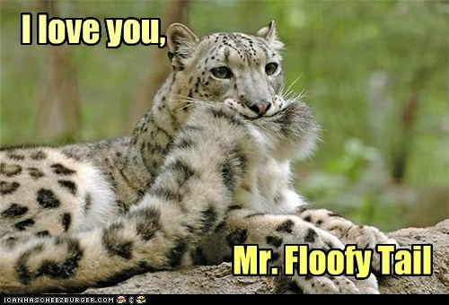 snow leopard,tail,biting,floofy,i love you