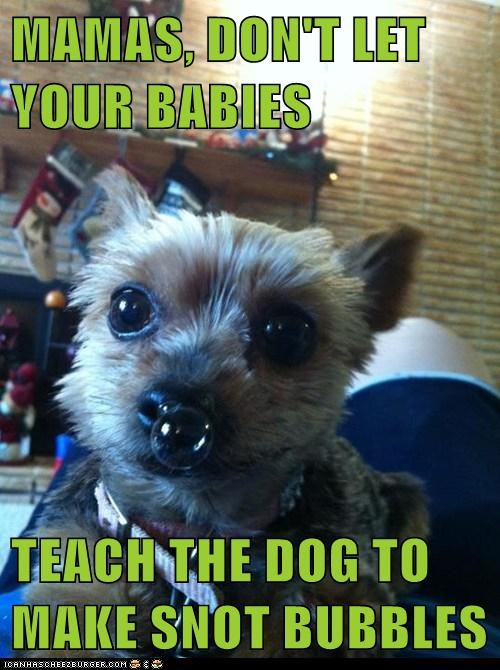 MAMAS, DON'T LET YOUR BABIES  TEACH THE DOG TO MAKE SNOT BUBBLES