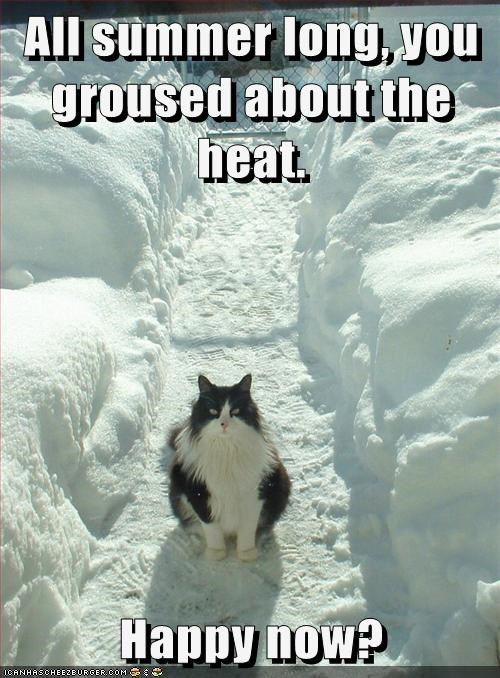 Heat,summer,winter,cold,snow,complain,happy,Cats,captions