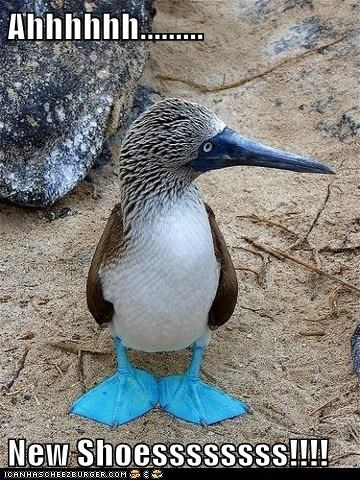 shoes,new,comfortable,feeling,ahhhh,blue-footed boobies