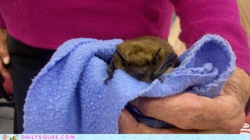 reader squee,rescue,bat,baby,rehabilitation