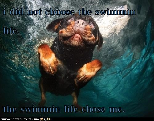 i did not choose the swimmin life.  the swimmin life chose me.