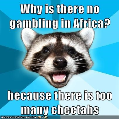 Why is there no gambling in Africa?  because there is too many cheetahs