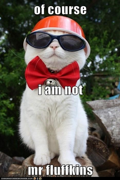 disguise,hide,shiro,outfit,blend in,Cats,captions,sunglasses,bow tie