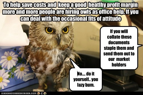 Owl,saving money,costs,attitued,work,Office,do it yourself,lazy