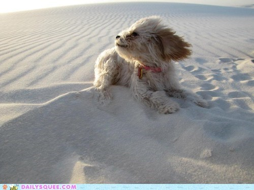 Reader Squee: White Sands