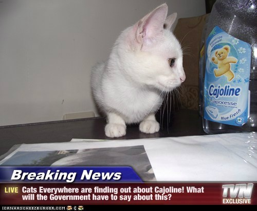 Breaking News - Cats Everywhere are finding out about Cajoline! What will the Government have to say about this?