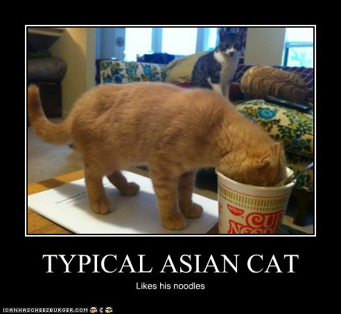 TYPICAL ASIAN CAT