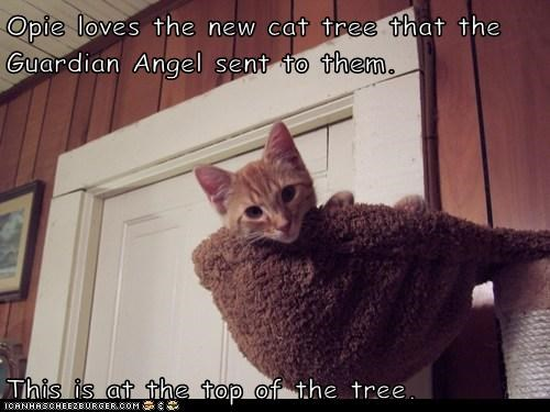 Opie loves the new cat tree that the Guardian Angel sent to them.   This is at the top of the tree.