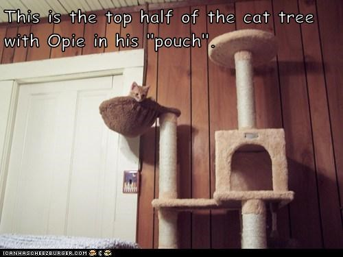 "This is the top half of the cat tree with Opie in his ""pouch""."
