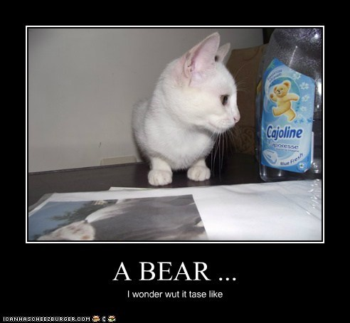 A BEAR ...