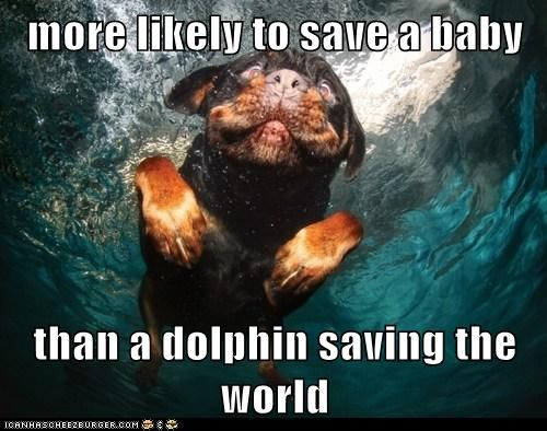 more likely to save a baby  than a dolphin saving the world