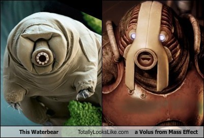This Waterbear Totally Looks Like a Volus from Mass Effect