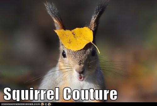 Squirrel Couture